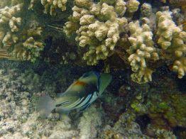 Seychellen-La_Digue-Anse_Source_d_Argent-Fische-4