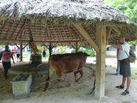 Seychellen-La_Digue-Union_Estate_Farm-Kokosnuss-Oel-1