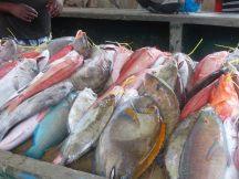 Seychellen-Mahe-Port_Victoria-Markt-Fisch-1