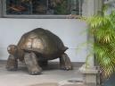 Seychellen-Mahe-Port_Victoria-Statue-Schildkroete-1