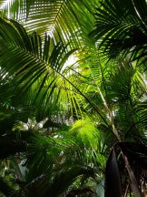 Seychellen-Praslin-Nationalpark-Vallee_de_Mai-2