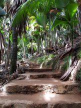 Seychellen-Praslin-Nationalpark-Vallee_de_Mai-3