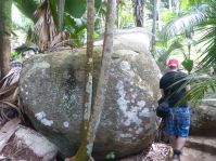 Seychellen-Praslin-Nationalpark-Vallee_de_Mai-5