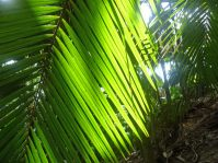 Seychellen-Praslin-Nationalpark-Vallee_de_Mai-6