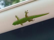 Seychellen-Praslin-Nationalpark-Vallee_de_Mai-Salamander-1