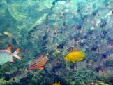 Seychellen-Ste_Anne_Marine_National_Park-Schnorcheln-Fische-3