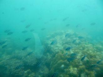 Seychellen-Ste_Anne_Marine_National_Park-Semi_U_Boot-Fische-1