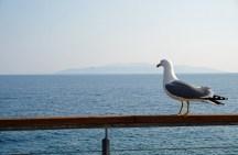 Kroatien-Opatija-Lido_Beach_Bar-Moewe-6