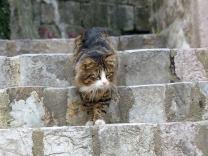 Montenegro-Kotor-Altstadt-Katze-1