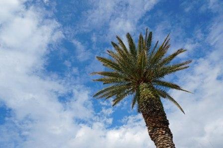 Split-Promenade-Palme-Himmel-1