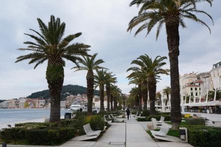 Split-Promenade-Riva-Palmen-1
