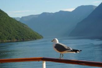 Hellesylt-Fjord-Berge-Moewe-1