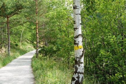 Norwegen-Eidfjord-Wanderweg_gelb-Baeume-2