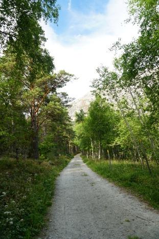 Norwegen-Eidfjord-Wanderweg_gelb-Baeume-8