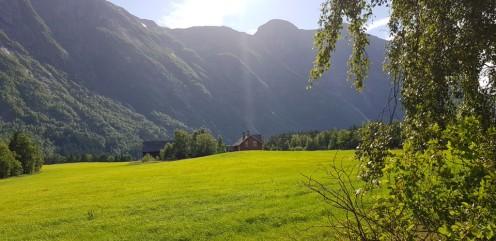 Norwegen-Eidfjord-Wanderweg_gelb-Wiesen-11