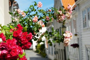 Norwegen-Stavanger-Altstadt-Gamle_Stavanger-Blumen-7