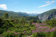 Norwegen-Voringfossen-Landschaft-Blumen-2
