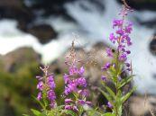 Norwegen-Voringfossen-Wasserfall-Blume-1